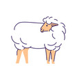 white sheep side view flat livestock farming vector image vector image