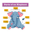 Diagram showing parts of elephant vector image vector image