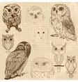 set retro owl sketches vector image