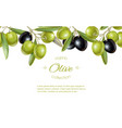 Olive horizontal banner vector image vector image