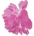 pink peony vector image