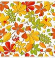 seamless pattern autumn falling leaf isolated on vector image vector image