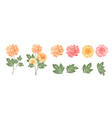 set different chrysanthemums on white vector image