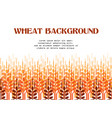 wheat ears background vector image