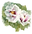 Watercolor blooming flowers in classical style on vector image