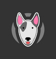 bull terrier in cartoon style vector image vector image