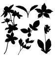 set botanical silhouettes vector image vector image