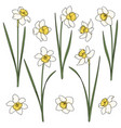 set color with white daffodils vector image