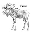 forest moose wild animal symbol of the north vector image