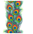 peacock feathers seamless pattern vector image vector image