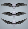 Three metal chrome skulls with two wings vector image vector image