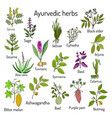 ayurvedic herbs natural botanical set vector image