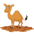 cartoon camel isolated on white background vector image vector image