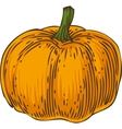 Ripe Orange Pumpkin vector image