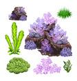 set of algae corals and underwater rocks