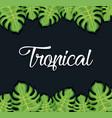 trendy summer tropical leaves banner vector image