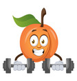 apricot lifting weights on white background vector image vector image