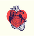 human heart that is falling in love vector image vector image