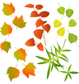 Leaf - collection for designers vector image vector image