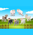 set of sheep and goat sticker vector image