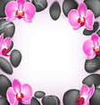 Spa stones with orchids flowers like frame on pink vector image vector image