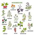 antispasmodic herbs hand drawn set of medicinal vector image vector image