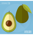 Avocado icon vector image vector image