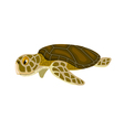 cartoon isolated sea turtle vector image vector image