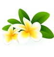 Frangipani vector | Price: 1 Credit (USD $1)