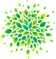 green watercolor summer leaves splash vector image