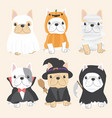 cute french bulldog dog in halloween costume flat vector image vector image