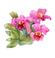 Watercolor blooming iris flowers vector image vector image