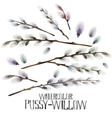 Watercolor pussy-willow set vector image vector image