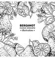 bergamot drawing frame isolated vintage vector image vector image