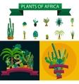 Desert plant of palm trees on white vector image vector image