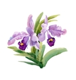 Watercolor blooming iris flowers vector image vector image