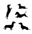 Dachshund silhouettes vector image vector image