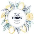 frame with hand drawn fresh lemon tree vector image vector image