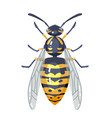 wasp insect isolated on white colorful wasp bug vector image
