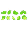 cut lime fresh citrus fruit slice and leaves vector image vector image