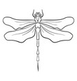 Dragonfly drawing on white background