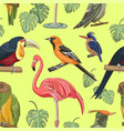 exotic colorful birds pattern vector image