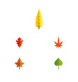 flat icon maple set of hickory frond alder and vector image vector image