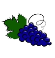 grape icon vector image