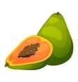 Papaya fruit vector image