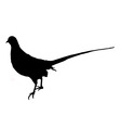 Pheasant silhouette vector image