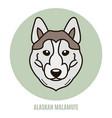 portrait of alaskan malamute vector image vector image