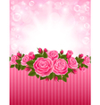 Roses backdrop vector image vector image