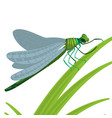 dragonfly insect with big eyes and strong vector image vector image