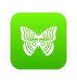 stripped butterfly icon digital green vector image vector image